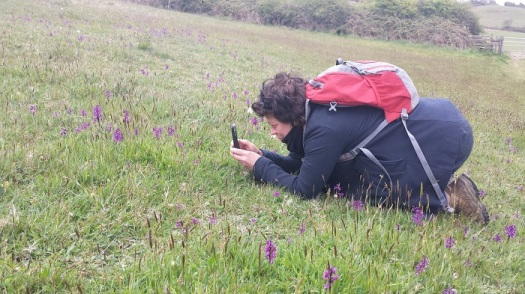 Kath photographing green-winged orchids (Anacamptis morio) at Stonebarrow Hill, near Lyme