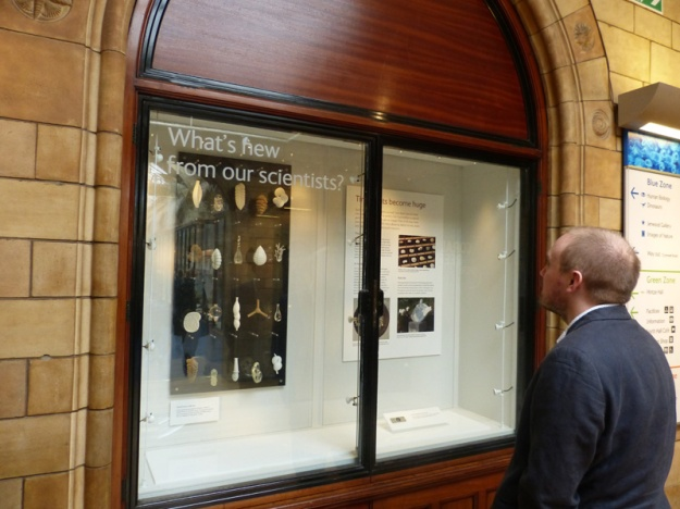 Senior Microfossil Curator Steve Stukins admiring some of the specimens and models on display and thinking