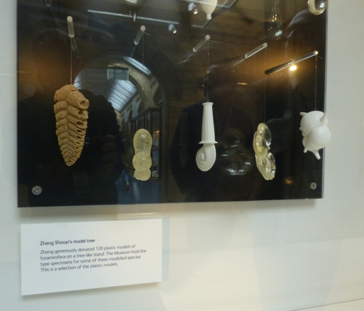 A selection of Zheng Shouyi's models of foraminifera