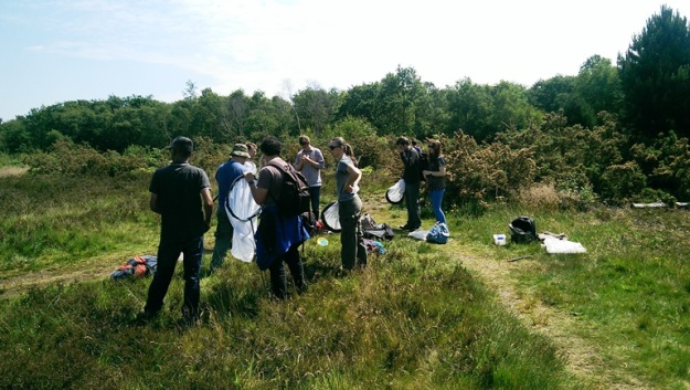 Out on Wimbledon Common with the Diptera team