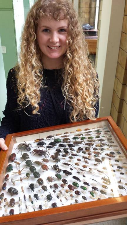 ID Trainer for the Future Katy Potts, with a drawer of coleoptera from the Museum's collection