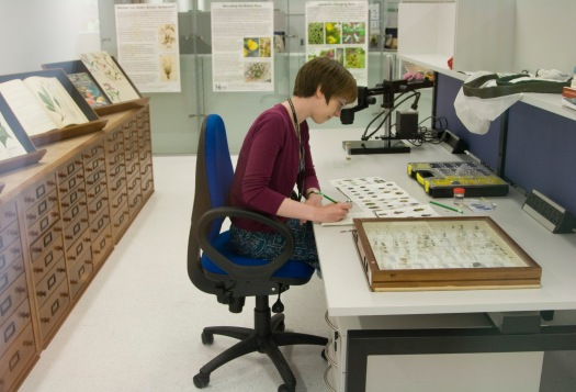 Photo of a naturalist using the workspaces and equipment available in the Centre