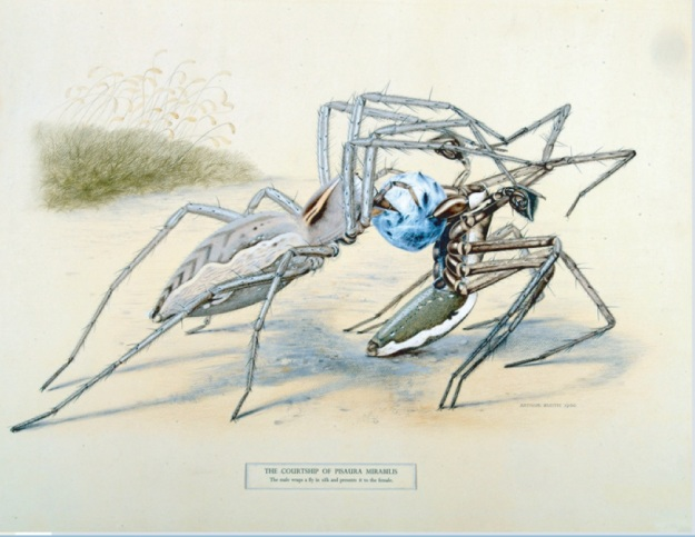 Image showing the digitised coloured image by Smith