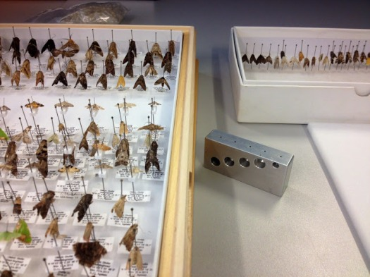 Photo showing moths in temporary storage and their final destination in a storage drawer.