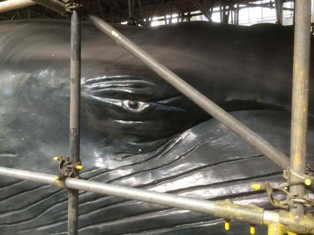 Photo of the blue whale model's eye through the scaffolding