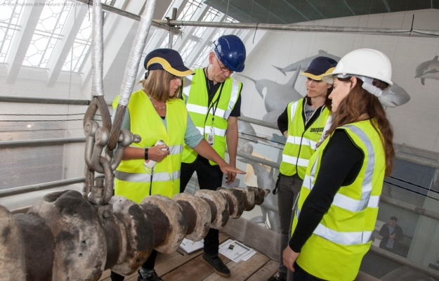 Photo of the conservators and curator discussing the state of the whale skeleton in situ