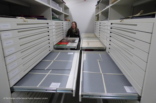 Photo showing Kate Tyte seated at the back of the Archives with drawers open in front of her