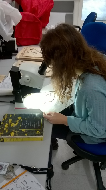 Photo of Sally looking down a light microscope at a herbarium sheet