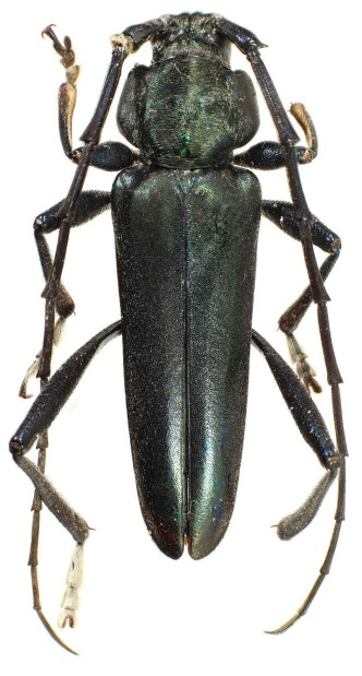 Photo of the specimen from above