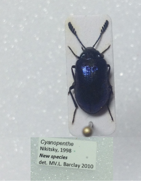 Photo of the specimen from above and its information card