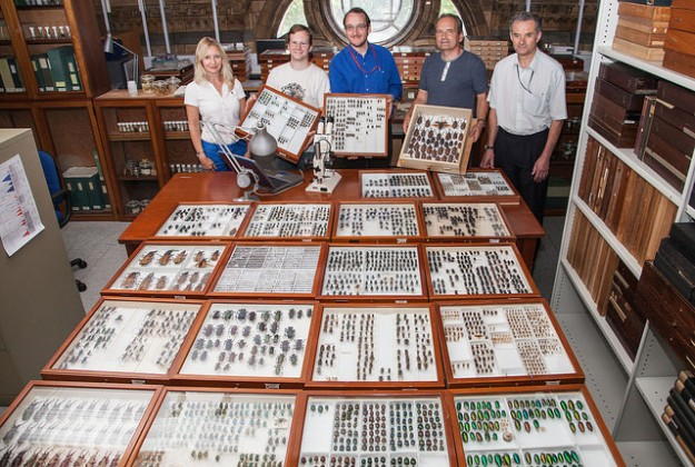 Photo showing the curators stood behind a table with a number of specimen drawers laid out on top of it.
