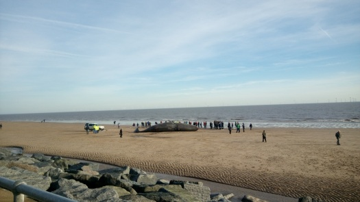 Beach with large whale laid out on sand, surrounded by people, with the north sea behind.