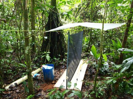 Photo showing a black net erected between trees as part of the trap