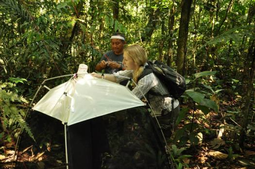 Photo showing Beulah and colleague erecting a SLAM trap in situ within the Ecuadorian forest