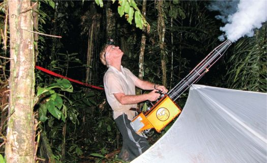 Photo showing Terry holding a fogging device at an angle and looking up into the tree canopy in the direction of the smoke it is emitting