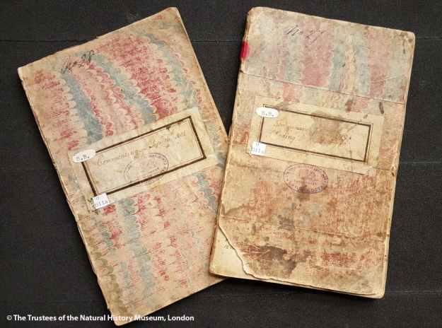 Photo from above showing the covers of the two faded notebooks