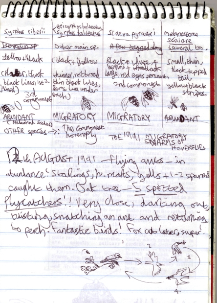 Photo of a page in Joe's notebook showing sketches and notes about insects and spotted flycatchers