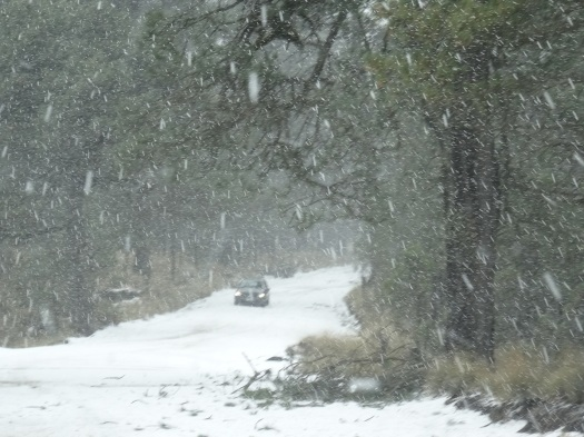 Photo showing heavy snowfall, and settled snow on a tree-lined road, with branches and leaves scattered on the surface