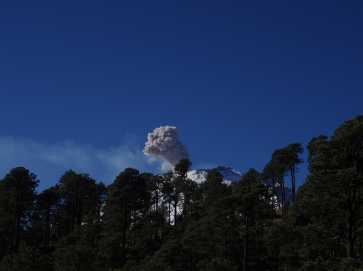 Photo of a tree line with the volcano just visible behind and above the centre of the line. A short, thick, dusty plume of ash can be seen rising from the peak.