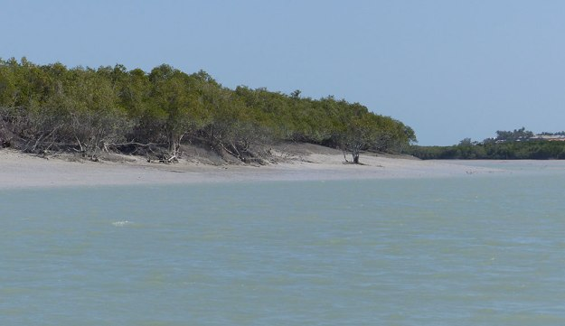 Photo of mangrove in Broome, Australia