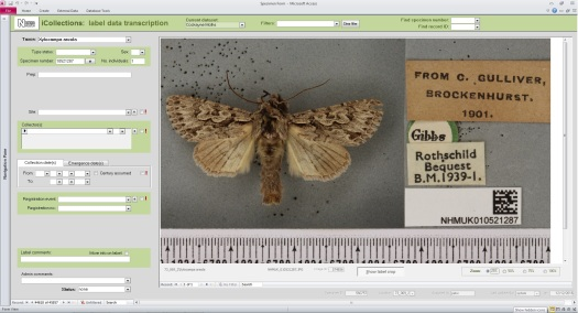 Screenshot of the transcription interface window with various text entry fields and drop down boxes, and the digital image of the specimen to the right.