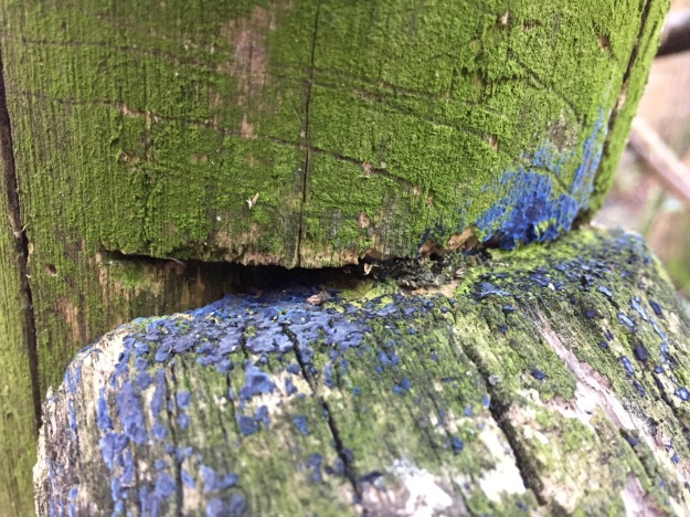Landscape photo with the junction of two mossy green fence posts dominating. A paint-like, cobalt blue fungus is dotted across the junction of the posts.