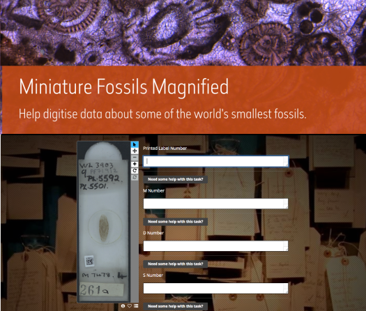 Screen grab of the Miniature Fossils Magnified web page. Various drop down text entry fields are visible for inputting the text written on the label of the slide shown as a photograph to the left.