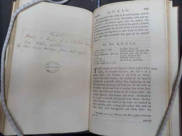 1768 edition of of Pennant's British Zoology opened at page 209, the entry for the quail. On the left handside blank page is a hand written note by the Pennant's. It reads 'Quail. Belly & thigh of a whitish brown legs pale yellow. Two shot near Mostyn Jun, 22d. 1776'.