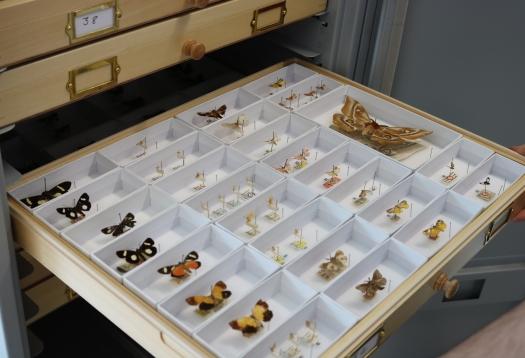 madagascan drawers