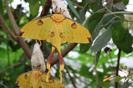 2) sensational butterflies