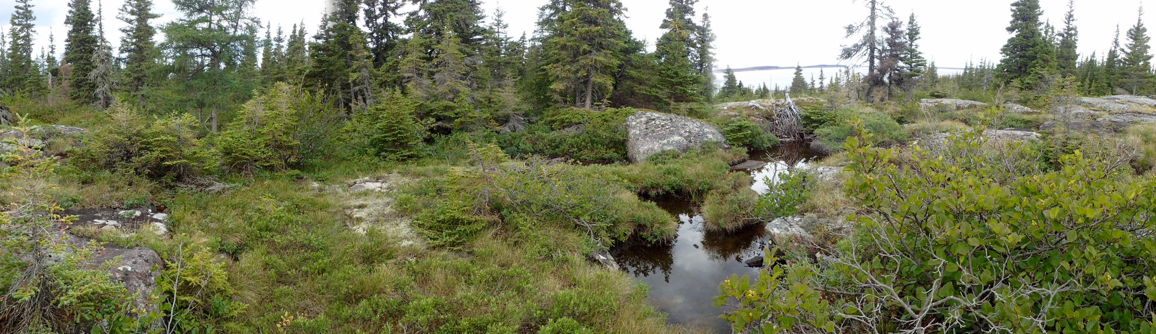 Panoramic photo showing the landscape. Various shrubs, trees and bushes are visible on a rocky ground in the foreground. A pool stretches from the middle to the bottom of the image to the right of the centre. A scattering of coniferous trees are present at the rear of the image.