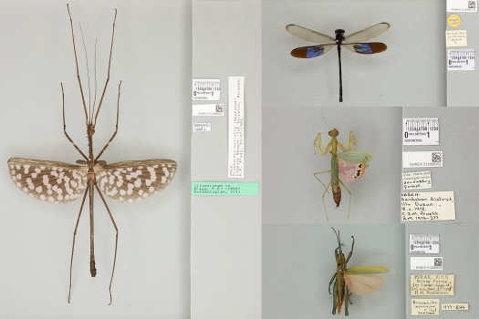 1) collage of specimens