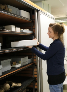 Dr Pip Brewer, collecting the specimens from the collection